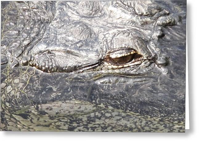 Florida Pyrography Greeting Cards - Aligatorscape Florida Greeting Card by Valia Bradshaw