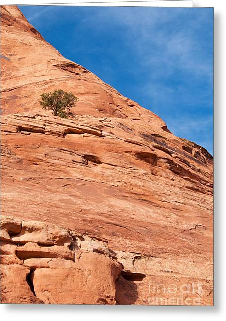 Slickrock Greeting Cards - All Alone Greeting Card by Bob and Nancy Kendrick