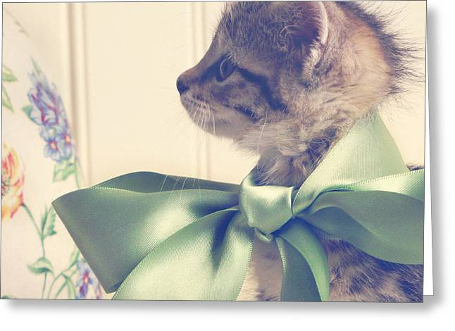 Kitten Greeting Cards - All Dressed Up Greeting Card by Amy Tyler