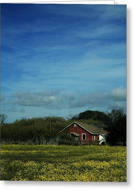 Old House Photographs Greeting Cards - All That Yellow Greeting Card by Laurie Search