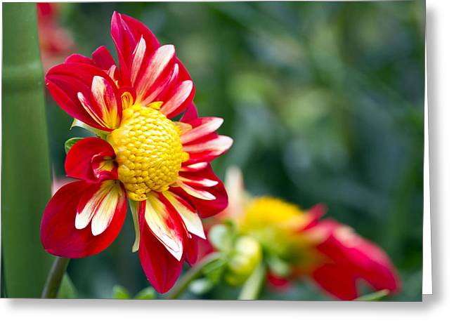 Phipps Conservatory Greeting Cards - All Things Bright Greeting Card by Ronald Hoehn