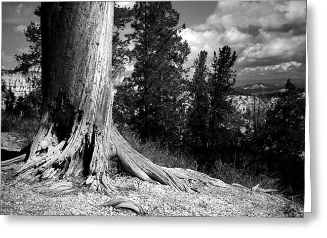 Tree Roots Greeting Cards - All This Time Greeting Card by Mike Irwin