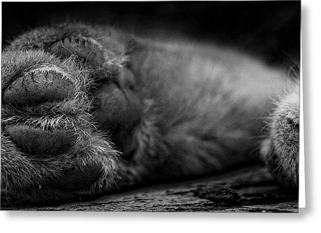 Edmonton Greeting Cards - Alley Kat Nap Greeting Card by Jerry Cordeiro