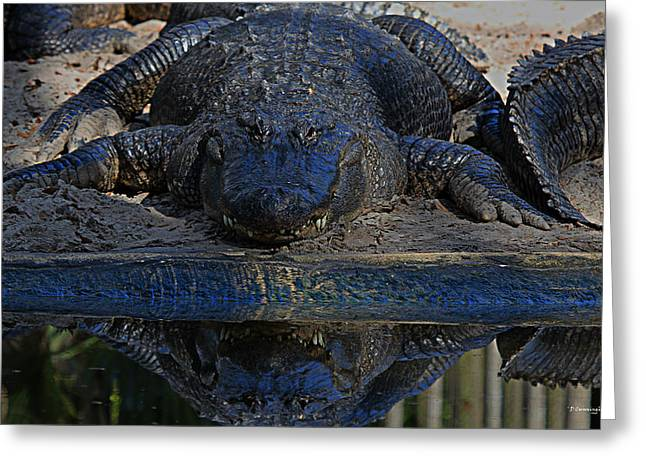 Alligator And Reflection Greeting Card by Dorothy Cunningham