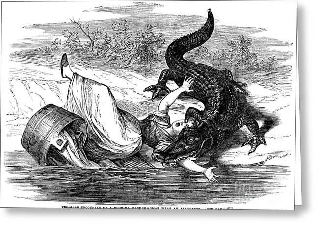 Washtubs Greeting Cards - ALLIGATOR ATTACK, c1865 Greeting Card by Granger