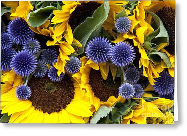 Agriculture Greeting Cards - Allium and sunflowers Greeting Card by Jane Rix