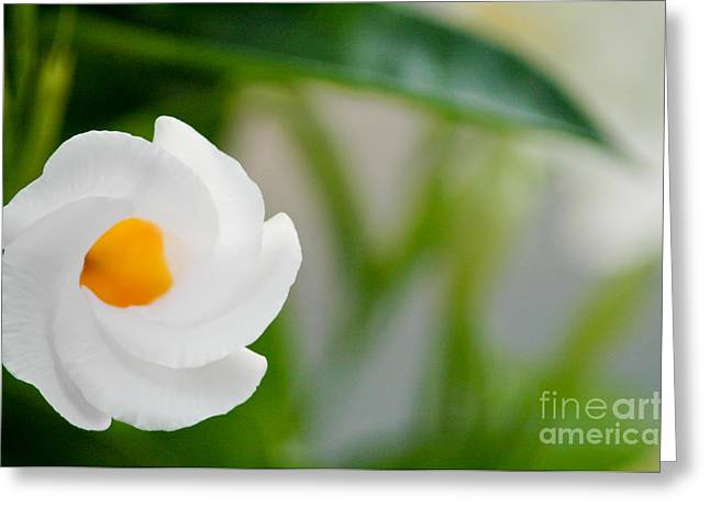 Almost Blooming Greeting Card by Maureen Norcross