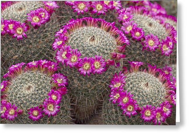 Pincushion Greeting Cards - Almost Perfect Greeting Card by Elvira Butler