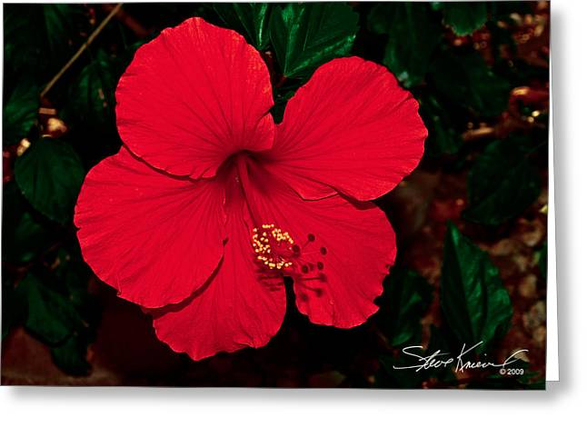 Steve Knievel Greeting Cards - Almost Perfect Hibiscus Greeting Card by Steve Knievel