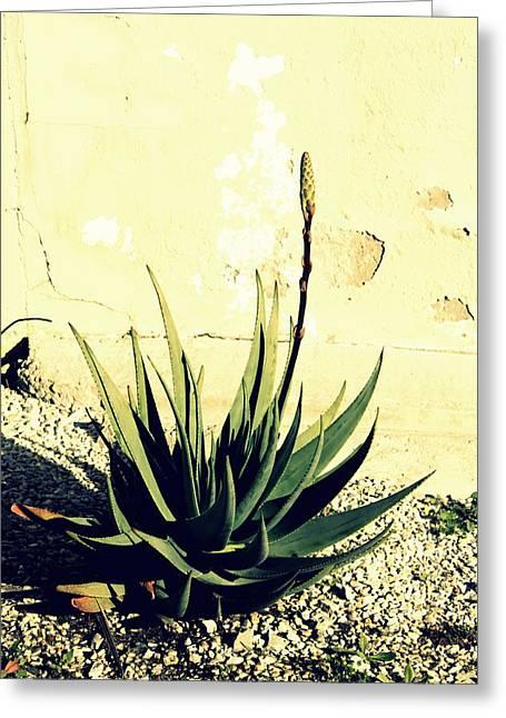 Aloe Greeting Card by Laurel Heritage