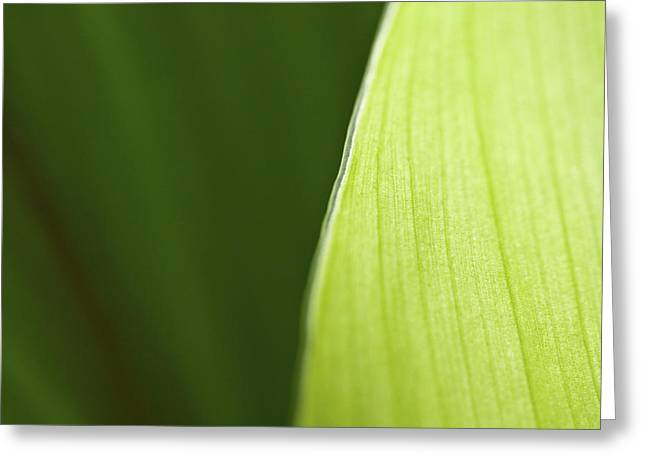 Abstract Flowers And Leaves Greeting Cards - Along the Edge Greeting Card by Rich Franco