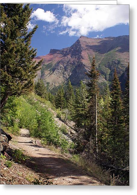 Along The Trail Greeting Card by Marty Koch