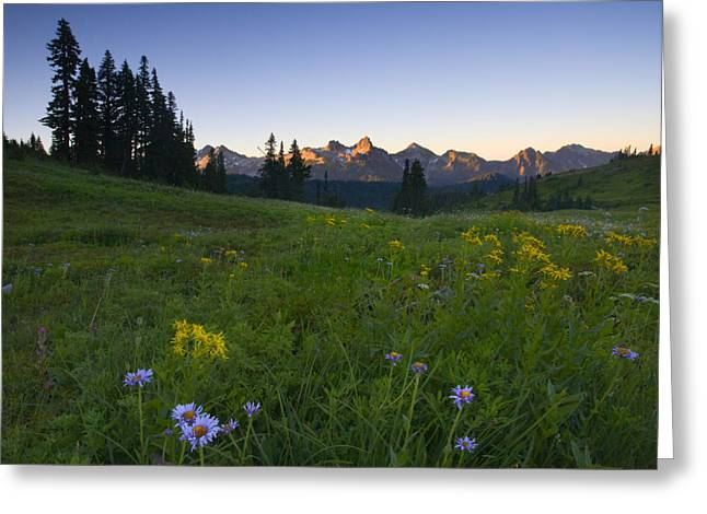 Aster Photographs Greeting Cards - Alpine Dawn Greeting Card by Mike  Dawson