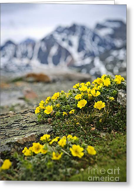 Alpine Greeting Cards - Alpine meadow  Greeting Card by Elena Elisseeva