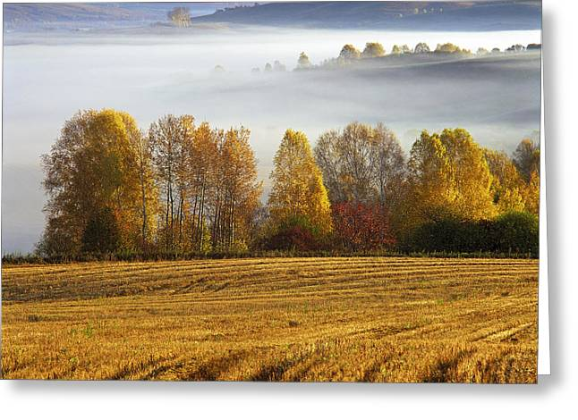 Agronomy Greeting Cards - Altai foothills Greeting Card by Pavel  Filatov