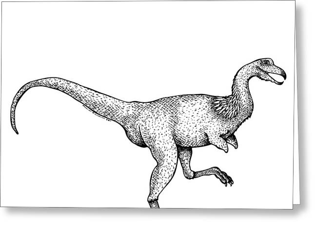Doodle Art Greeting Cards - Alvarezsaurus - Dinosaur Greeting Card by Karl Addison