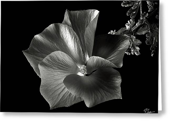 Flower Photos Greeting Cards - Alyogyne Hibiscus in Black and White Greeting Card by Endre Balogh