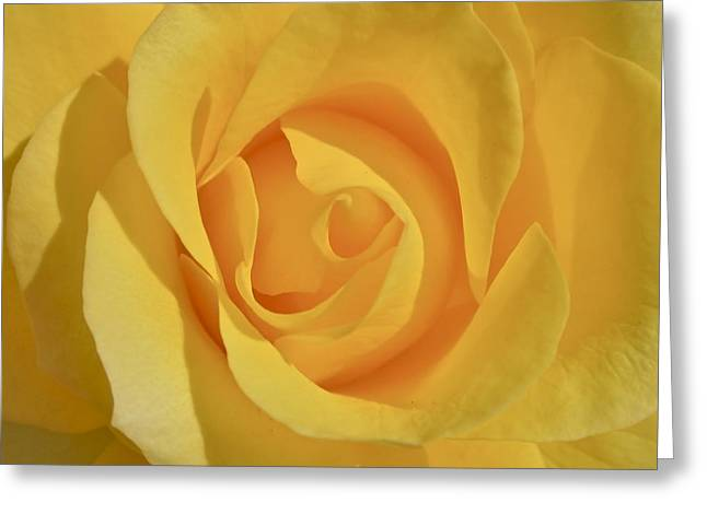 Floral Photographs Greeting Cards - Amarillo Greeting Card by Gwyn Newcombe
