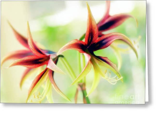Stigma Greeting Cards - Amaryllis (hippeastrum Sp.) Greeting Card by Maria Mosolova