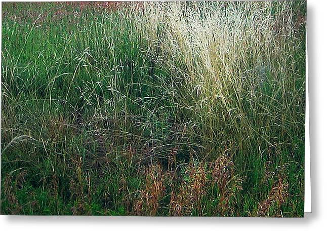 Luminist Greeting Cards - Amazing Grass Three Greeting Card by Ric Soulen