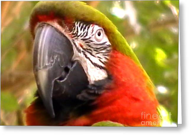 Insects Greeting Cards - Amazon Macaw Greeting Card by John From CNY