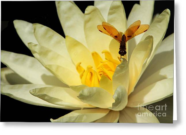 Faries Greeting Cards - Amber Dragonfly Dancer Too Greeting Card by Sabrina L Ryan