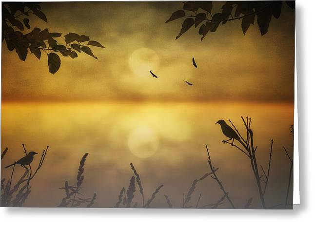 Tom York Images Greeting Cards - Amber Morning Greeting Card by Tom York Images