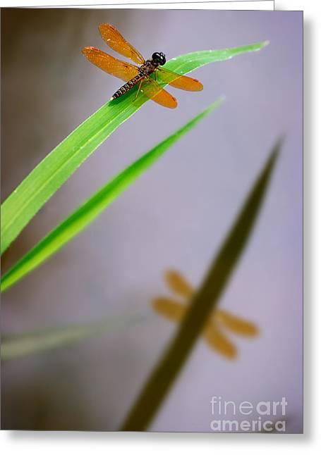 Amberwing Greeting Cards - Amberwing Reflection Greeting Card by Susan Isakson
