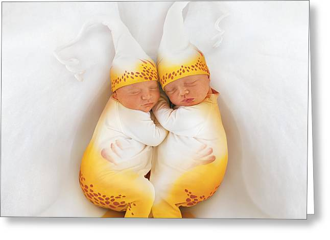 Orchids Greeting Cards - Amelia & Kate in Moth Orchid Greeting Card by Anne Geddes
