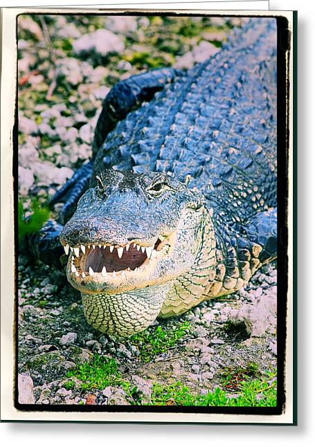 Hiding Greeting Cards - American Alligator Greeting Card by Rudy Umans