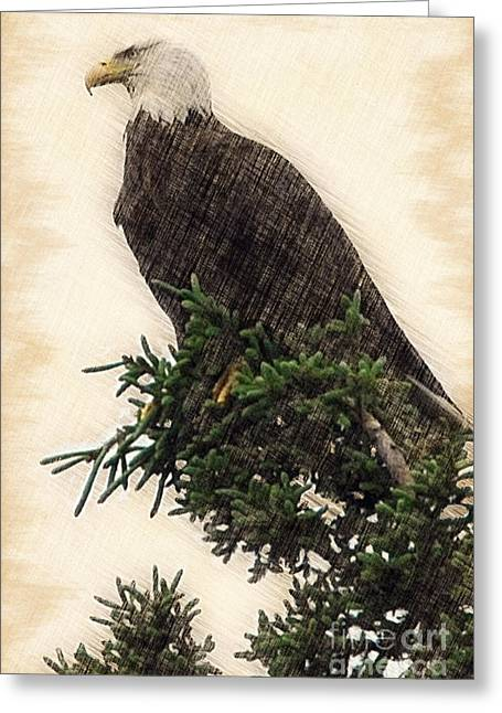 American Bald Eagle In Tree Greeting Card by Dan Friend