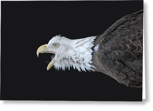 American Bald Eagle Greeting Card by Paul Ward