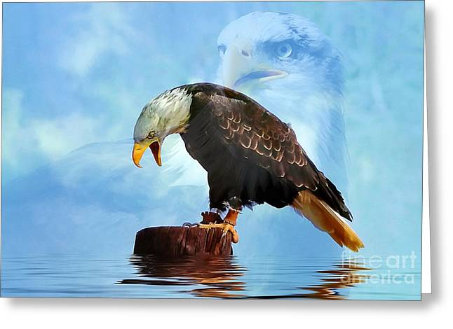 Bar Accessory Greeting Cards - American Bald Eagle Greeting Card by Renate Knapp