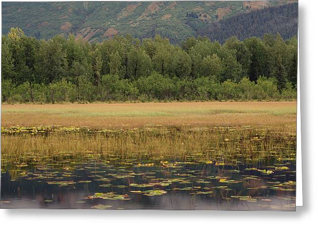 Pond In Park Greeting Cards - American Beaver Castor Canadensis Pond Greeting Card by Gerry Ellis