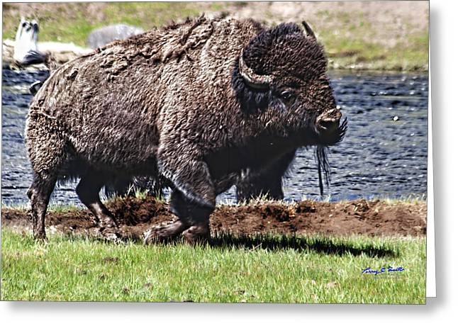 American Bison Img 8881   2012 Greeting Card by Torrey E Smith