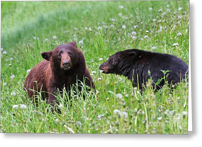American Black Bear With Cub Greeting Card by Louise Heusinkveld