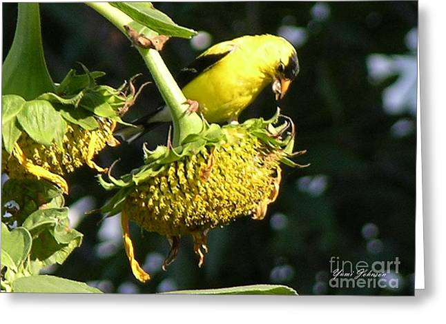 Yellow Sunflower Pyrography Greeting Cards - American Goldfinch Greeting Card by Yumi Johnson