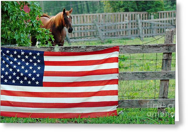 Caballo. Fence Greeting Cards - American Horse Greeting Card by Anahi DeCanio