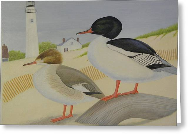 On The Beach Drawings Greeting Cards - American Mergansers Greeting Card by Alan Suliber