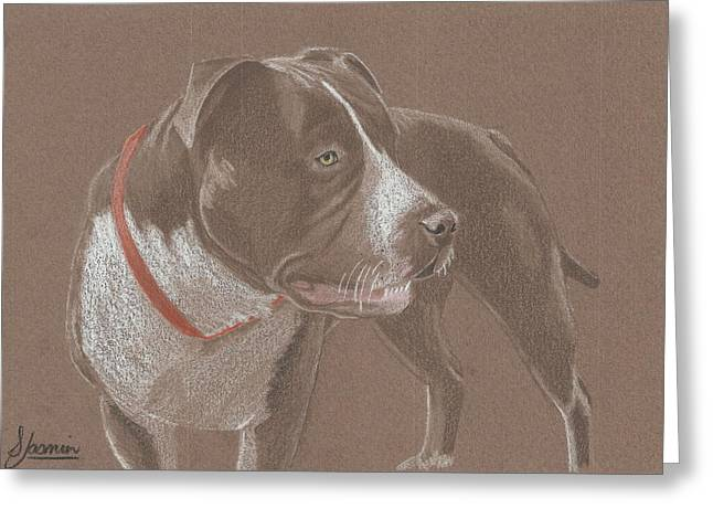 Bully Greeting Cards - American Pit Bull Terrior 1 Greeting Card by Stacey Jasmin