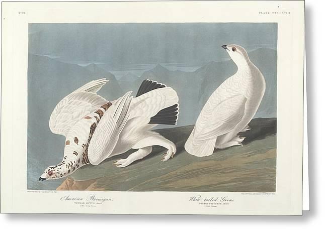 American Ptarmigan Greeting Card by John James Audubon