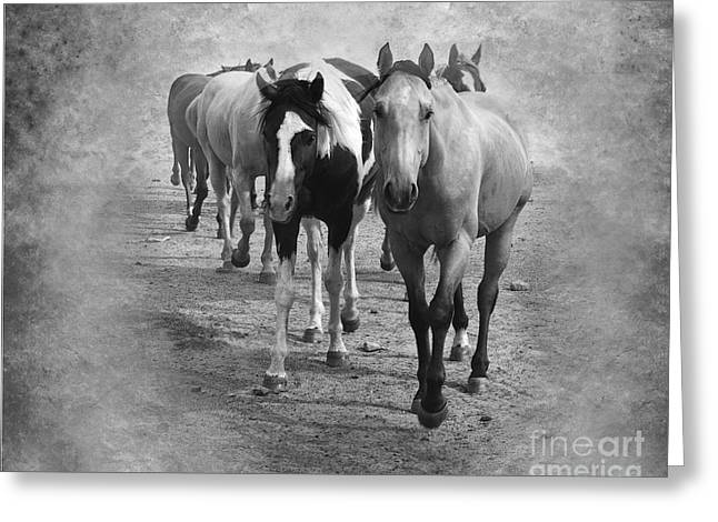 Quarter Horse Digital Art Greeting Cards - American Quarter Horse Herd in Black and White Greeting Card by Betty LaRue