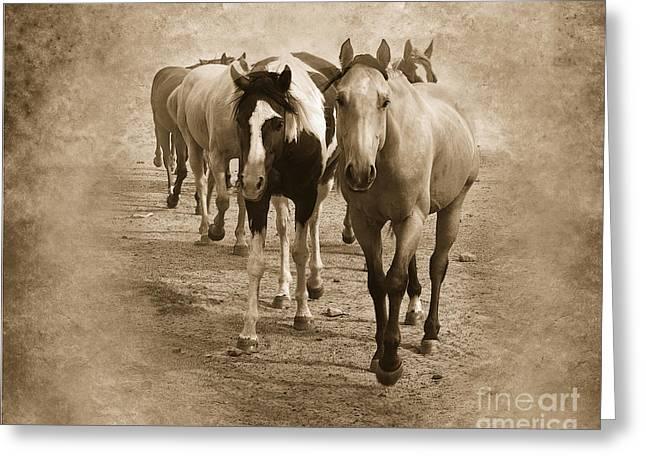 Quarter Horse Digital Greeting Cards - American Quarter Horse Herd in Sepia Greeting Card by Betty LaRue