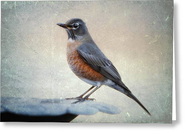 American Robin Greeting Cards - American Robin in Winter Greeting Card by Bonnie Barry