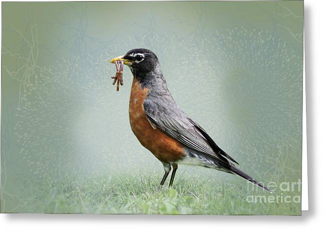 American Robin Greeting Cards - American Robin with Worms Greeting Card by Betty LaRue