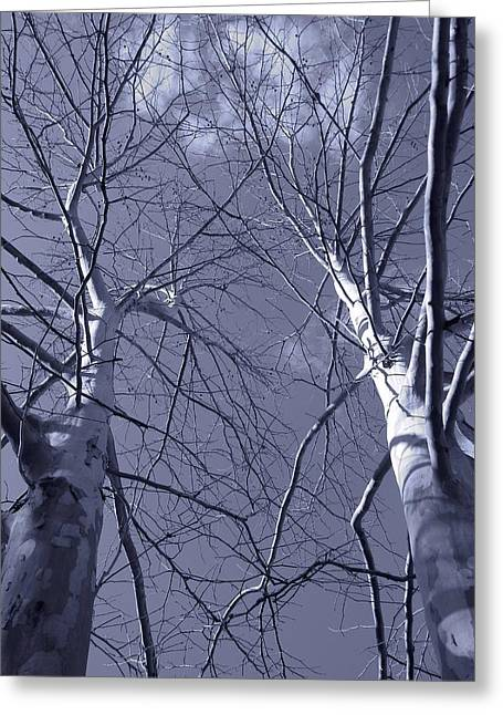 American Sycamore Greeting Cards - American Sycamore Cyanotype Greeting Card by Warren Thompson