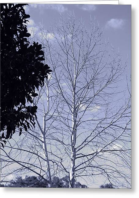 American Sycamore Greeting Cards - American Sycamore Scene Cyanotype Greeting Card by Warren Thompson