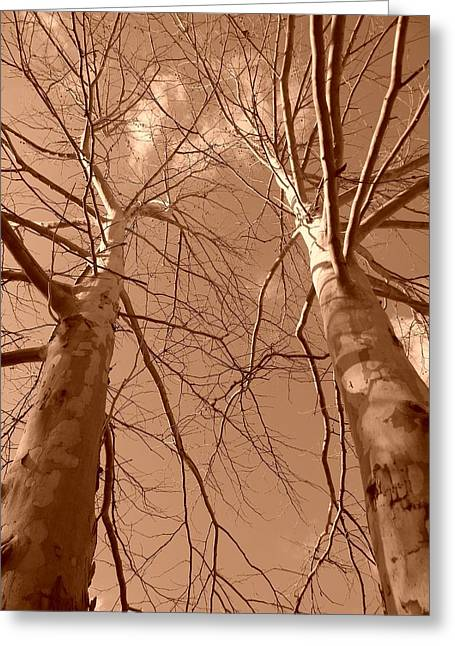 American Sycamore Greeting Cards - American Sycamore Sepia Greeting Card by Warren Thompson
