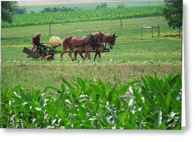 Amish at Work Greeting Card by Dottie Gillespie