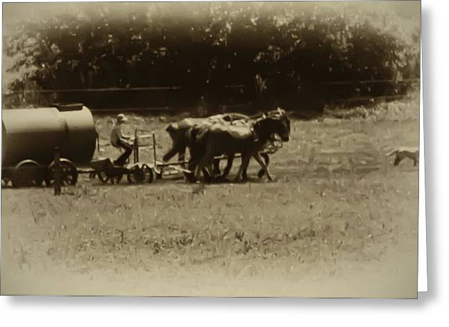 Amish Greeting Cards - Amish Farmer - Lancaster County Pa. Greeting Card by Bill Cannon